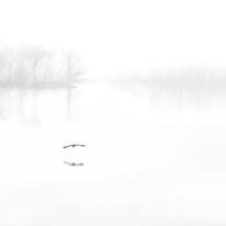 Foggy Flight — Jordan Lake, NC © jj raia